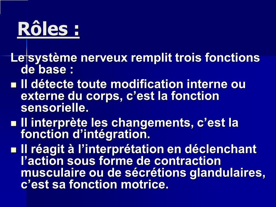 Rôles : Le système nerveux remplit trois fonctions de base : Il détecte toute modification interne ou externe du corps, cest la fonction sensorielle.