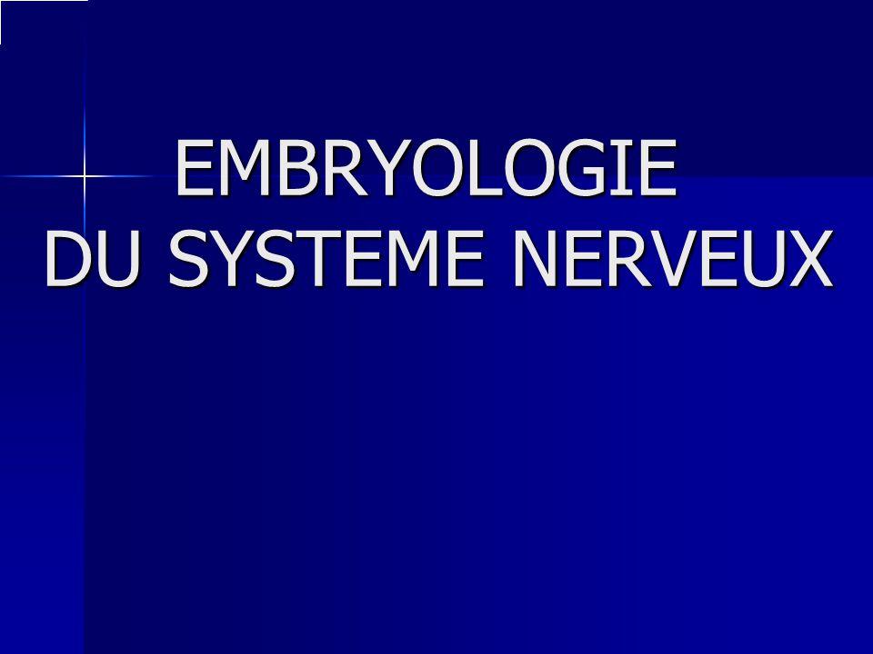 EMBRYOLOGIE DU SYSTEME NERVEUX