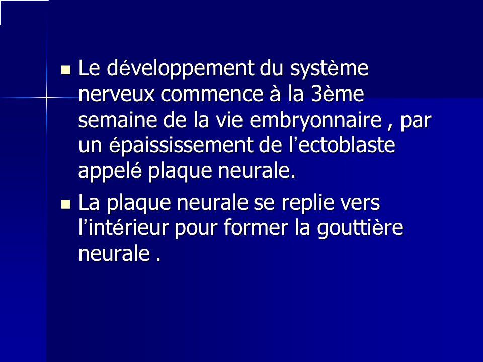 Le développement du système nerveux commence à la 3ème semaine de la vie embryonnaire, par un épaississement de lectoblaste appelé plaque neurale. La