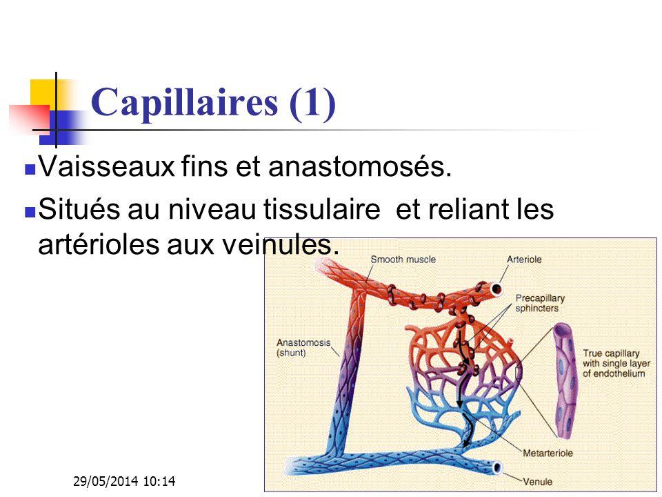 29/05/2014 10:16 Dr. ABDALLAH - Appareil circulatoire14 Capillaires (1) Vaisseaux fins et anastomosés. Situés au niveau tissulaire et reliant les arté