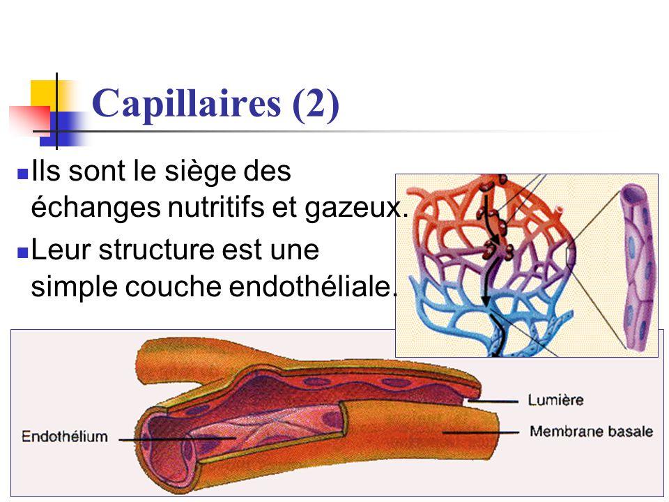 29/05/2014 10:16 Dr. ABDALLAH - Appareil circulatoire15 Capillaires (2) Ils sont le siège des échanges nutritifs et gazeux. Leur structure est une sim