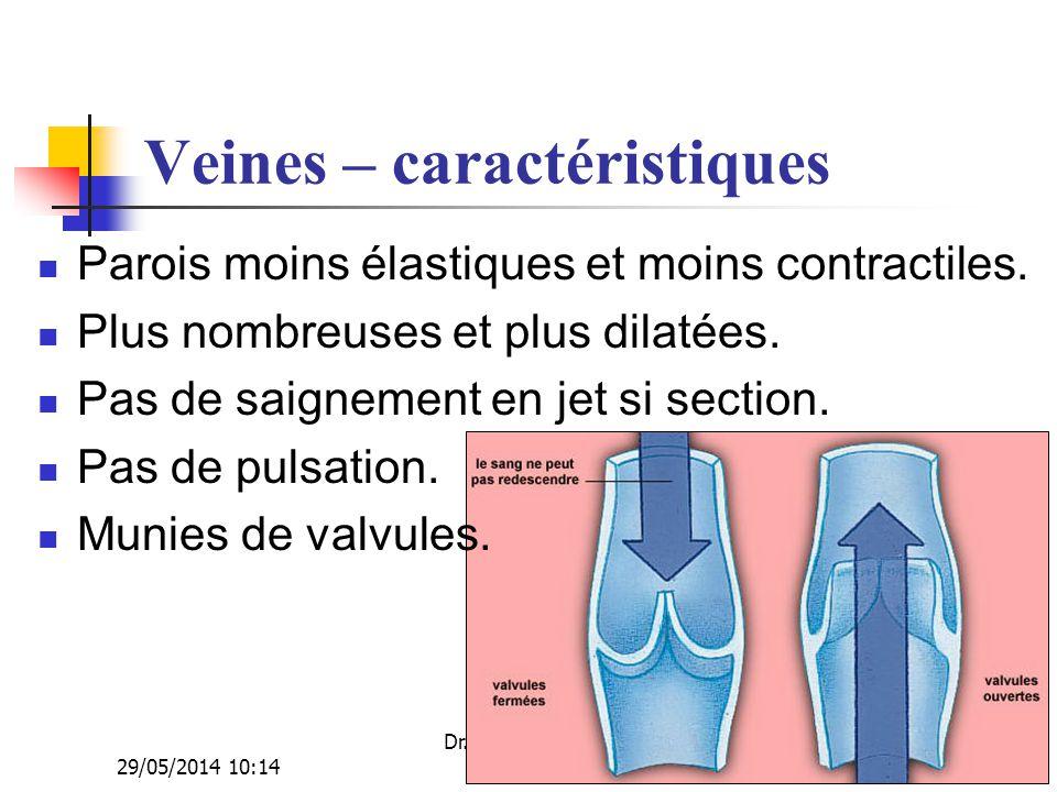 29/05/2014 10:16 Dr. ABDALLAH - Appareil circulatoire18 Veines – caractéristiques Parois moins élastiques et moins contractiles. Plus nombreuses et pl