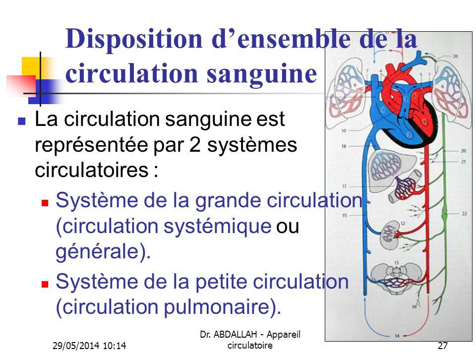 29/05/2014 10:16 Dr. ABDALLAH - Appareil circulatoire27 Disposition densemble de la circulation sanguine La circulation sanguine est représentée par 2