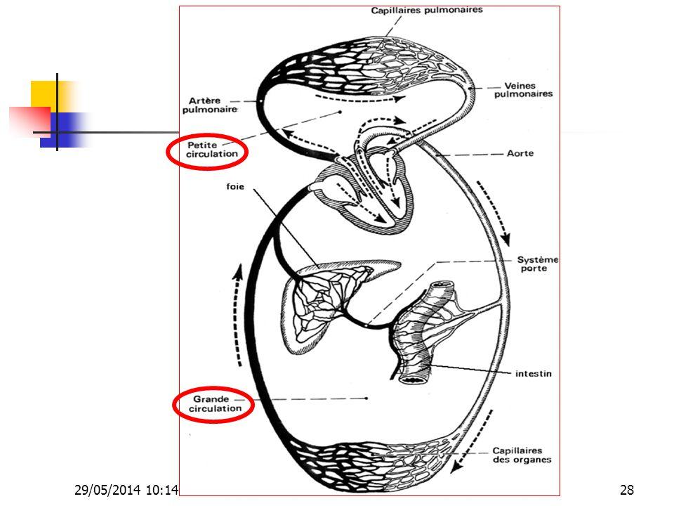 29/05/2014 10:16 Dr. ABDALLAH - Appareil circulatoire28