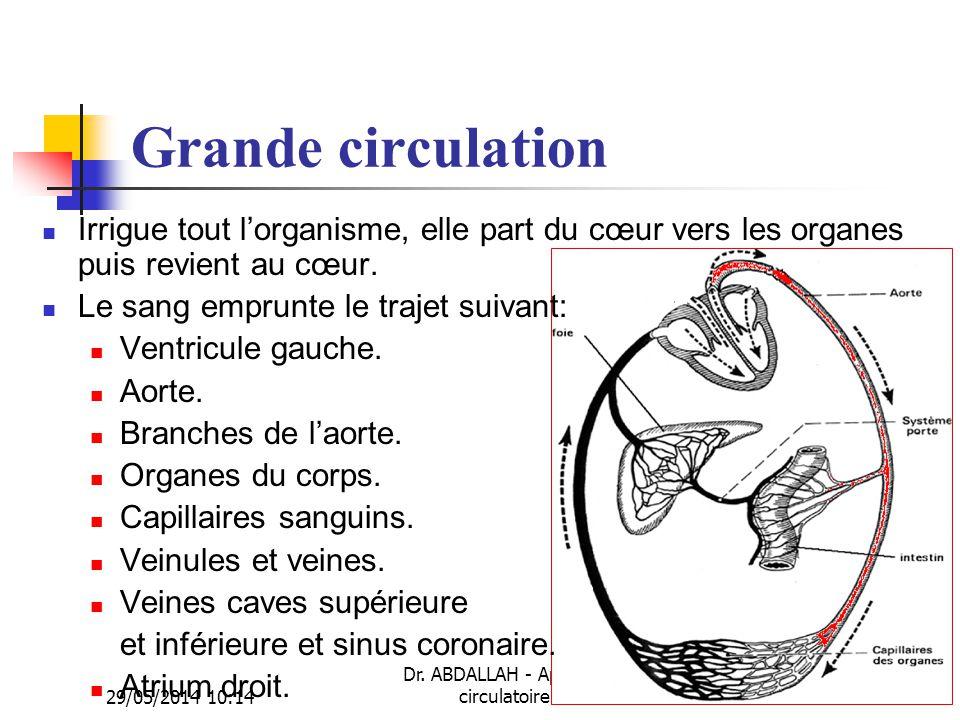 29/05/2014 10:16 Dr. ABDALLAH - Appareil circulatoire29 Grande circulation Irrigue tout lorganisme, elle part du cœur vers les organes puis revient au
