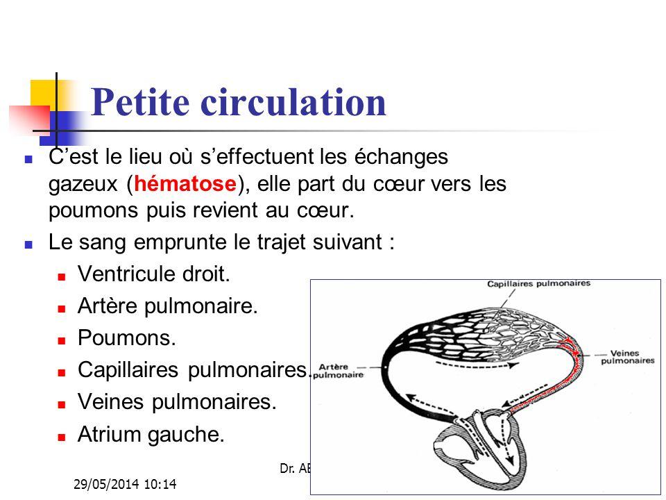 29/05/2014 10:16 Dr. ABDALLAH - Appareil circulatoire30 Petite circulation Cest le lieu où seffectuent les échanges gazeux (hématose), elle part du cœ