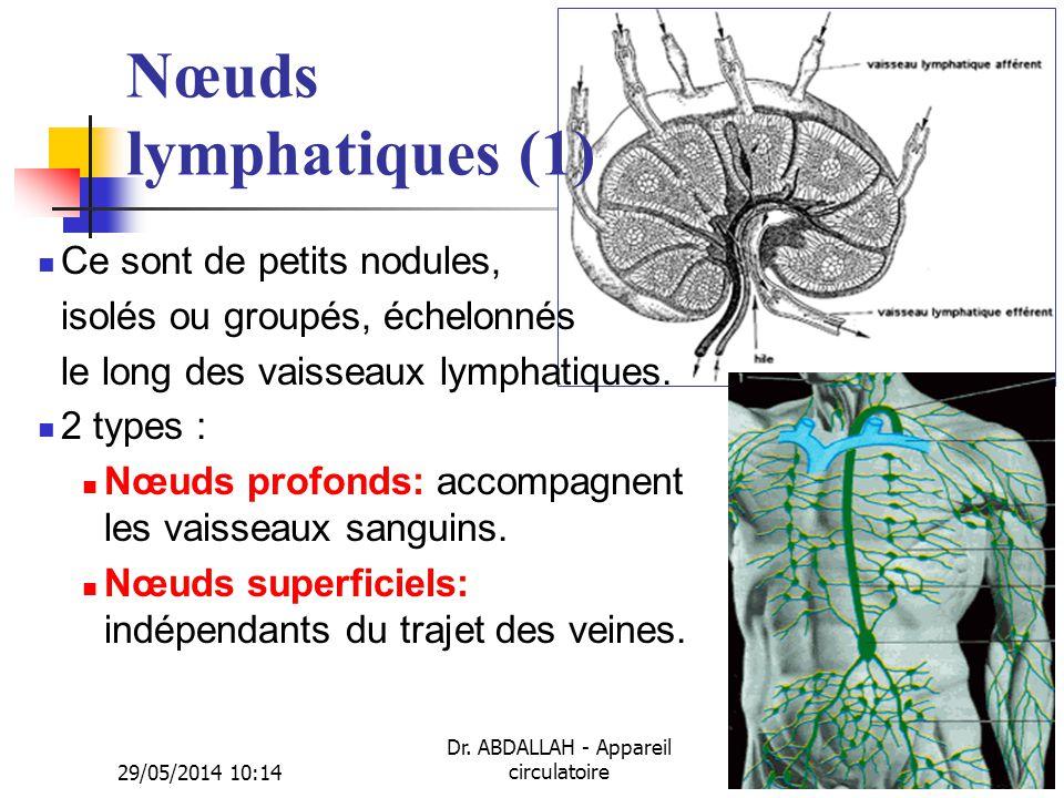 29/05/2014 10:16 Dr. ABDALLAH - Appareil circulatoire38 Nœuds lymphatiques (1) Ce sont de petits nodules, isolés ou groupés, échelonnés le long des va