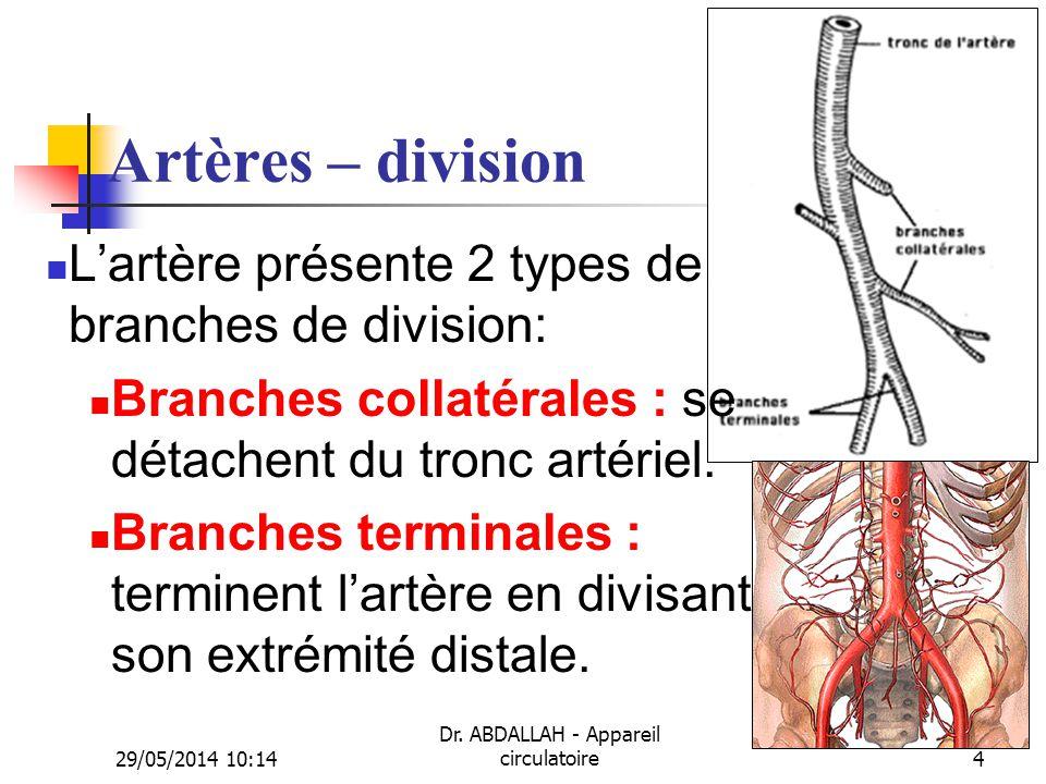 29/05/2014 10:16 Dr. ABDALLAH - Appareil circulatoire4 Artères – division Lartère présente 2 types de branches de division: Branches collatérales : se
