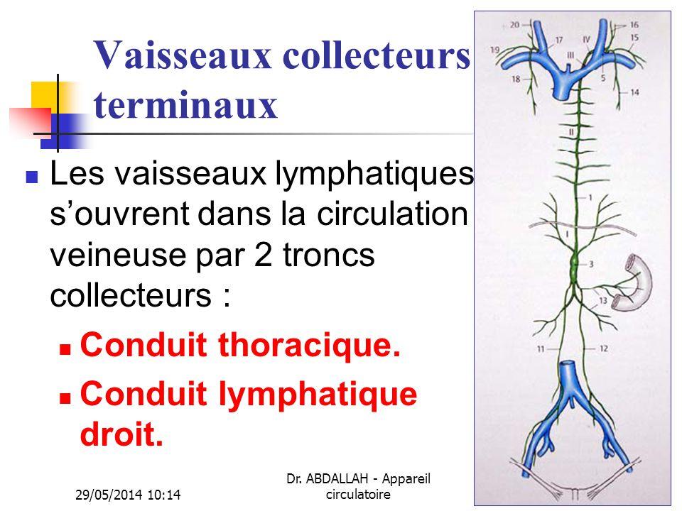 29/05/2014 10:16 Dr. ABDALLAH - Appareil circulatoire40 Vaisseaux collecteurs terminaux Les vaisseaux lymphatiques souvrent dans la circulation veineu