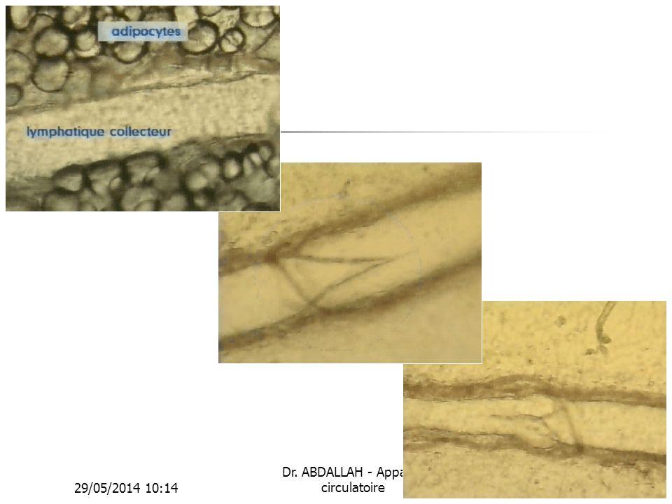 29/05/2014 10:16 Dr. ABDALLAH - Appareil circulatoire43