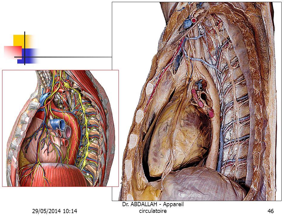 29/05/2014 10:16 Dr. ABDALLAH - Appareil circulatoire46