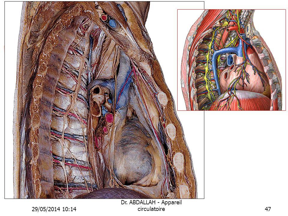 29/05/2014 10:16 Dr. ABDALLAH - Appareil circulatoire47
