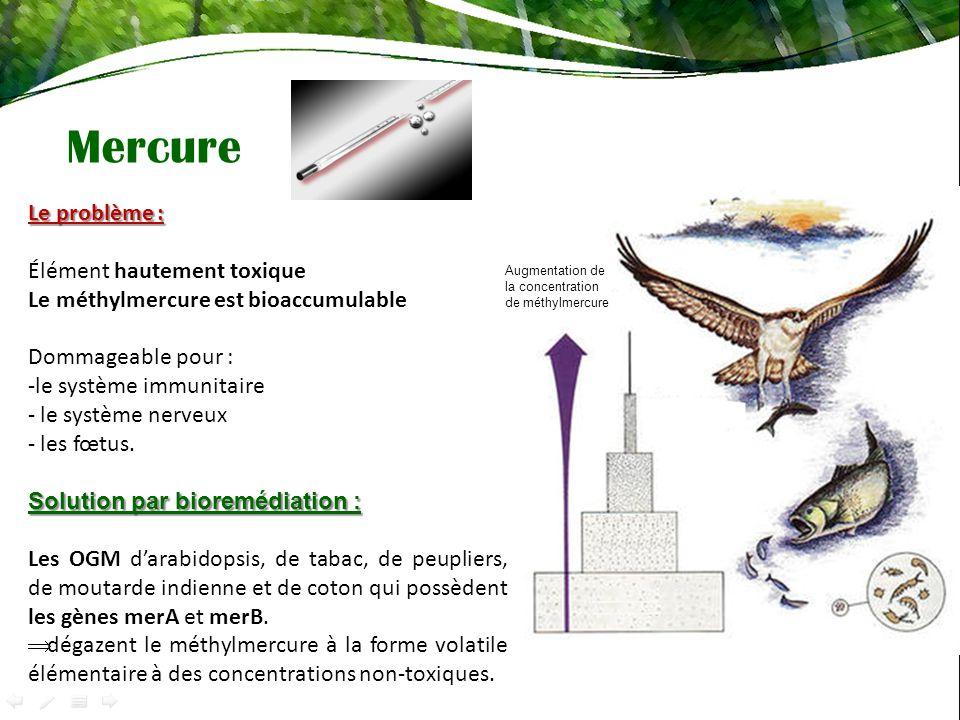 Mercure Le problème : Élément hautement toxique Le méthylmercure est bioaccumulable Dommageable pour : -le système immunitaire - le système nerveux - les fœtus.