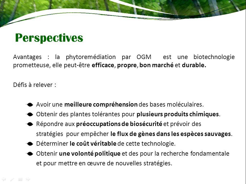 Avantages : la phytoremédiation par OGM est une biotechnologie prometteuse, elle peut-être efficace, propre, bon marché et durable. Défis à relever :