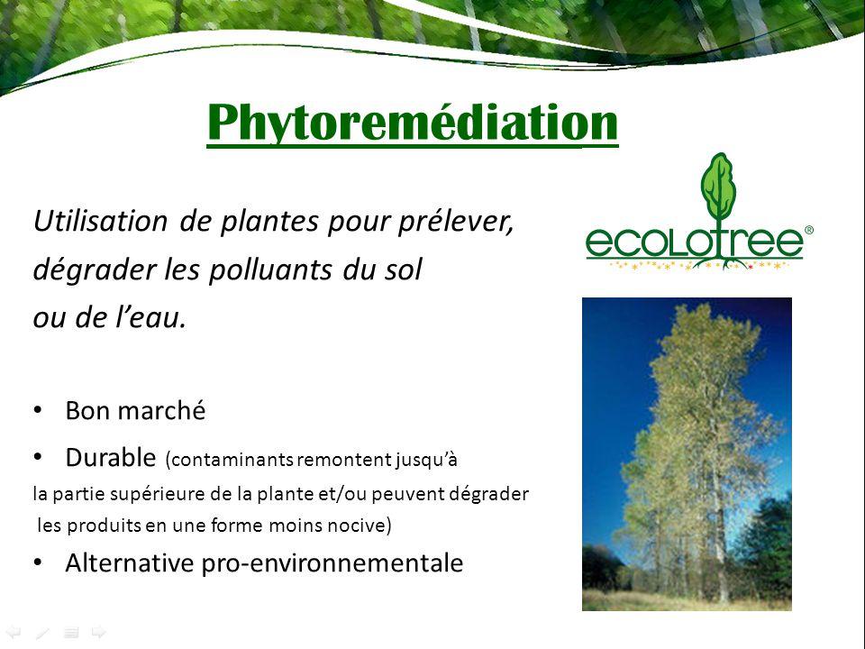 Phytoremédiation Utilisation de plantes pour prélever, dégrader les polluants du sol ou de leau. Bon marché Durable (contaminants remontent jusquà la