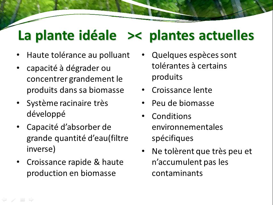 La plante idéale > < plantes actuelles Haute tolérance au polluant capacité à dégrader ou concentrer grandement le produits dans sa biomasse Système r