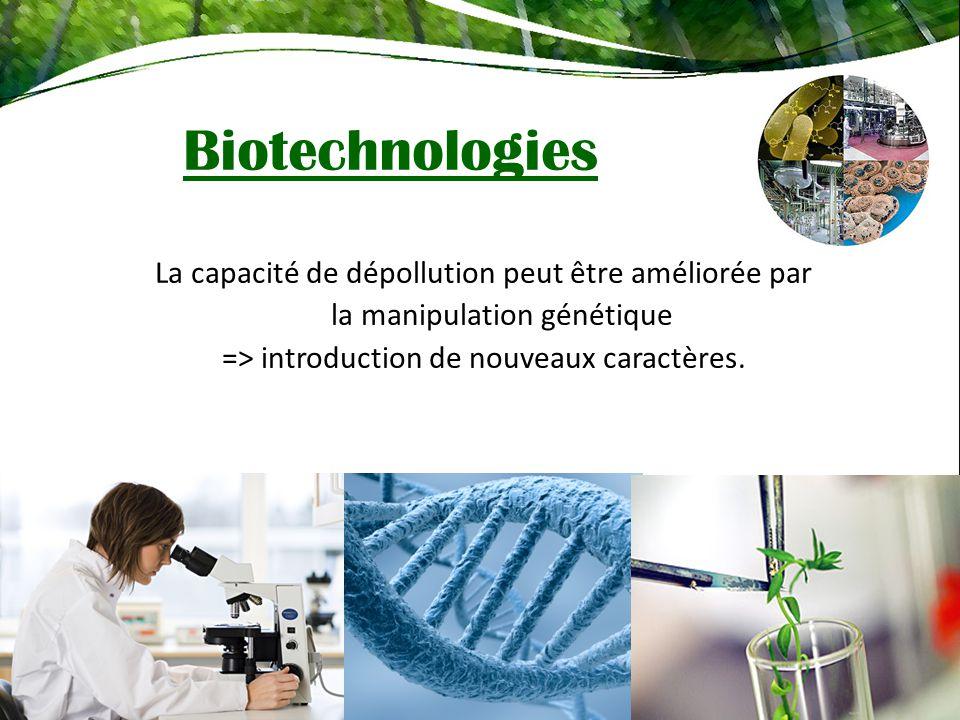 La capacité de dépollution peut être améliorée par la manipulation génétique => introduction de nouveaux caractères. Biotechnologies