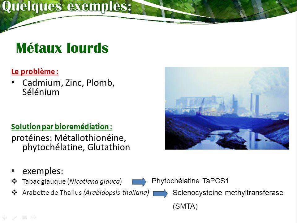 Le problème : Cadmium, Zinc, Plomb, Sélénium Solution par bioremédiation : protéines: Métallothionéine, phytochélatine, Glutathion exemples: Tabac glauque (Nicotiana glauca) Arabette de Thalius (Arabidopsis thaliana) Phytochélatine TaPCS1 Selenocysteine methyltransferase (SMTA) Métaux lourds