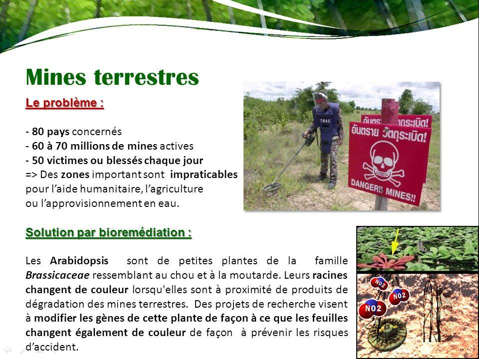 Mines terrestres Le problème : - 80 pays concernés - 60 à 70 millions de mines actives - 50 victimes ou blessés chaque jour => Des zones important sont impraticables pour laide humanitaire, lagriculture ou lapprovisionnement en eau.