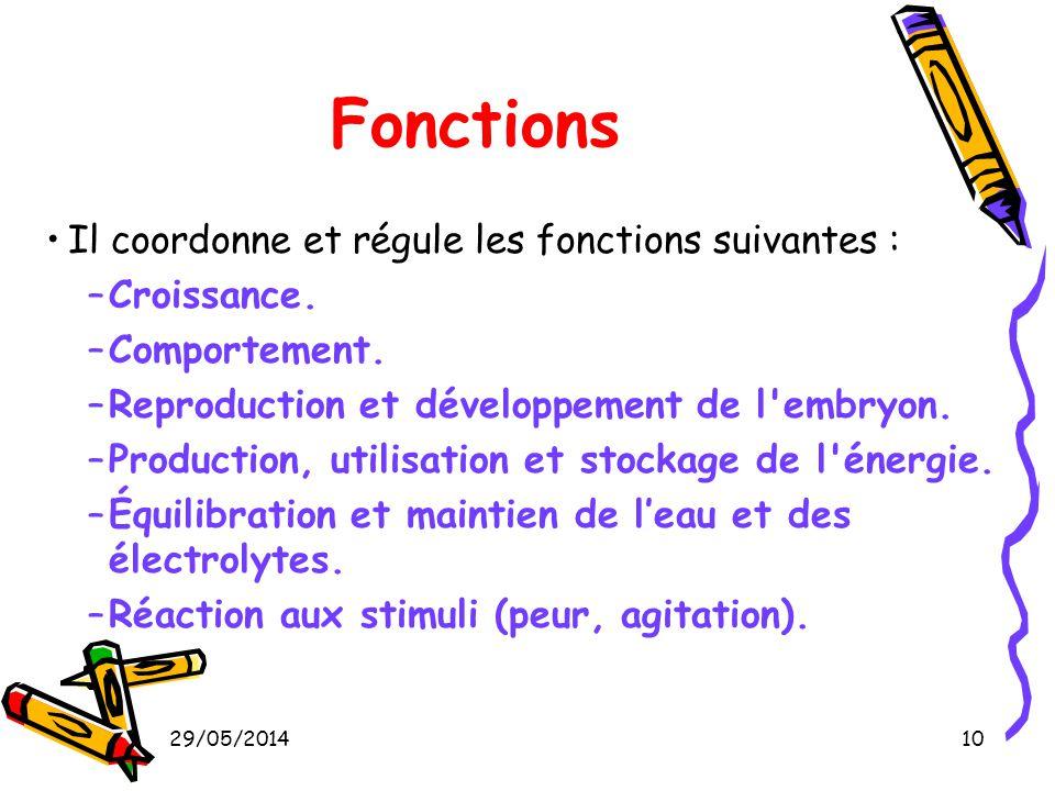 10 Fonctions Il coordonne et régule les fonctions suivantes : –Croissance. –Comportement. –Reproduction et développement de l'embryon. –Production, ut
