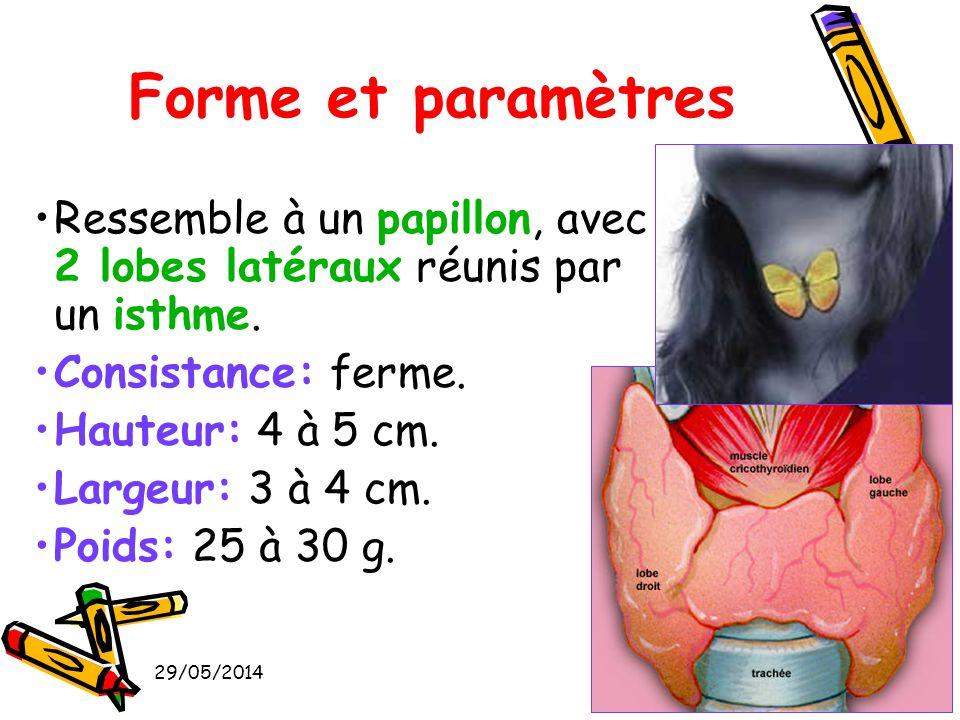 29/05/201418 Ressemble à un papillon, avec 2 lobes latéraux réunis par un isthme. Consistance: ferme. Hauteur: 4 à 5 cm. Largeur: 3 à 4 cm. Poids: 25