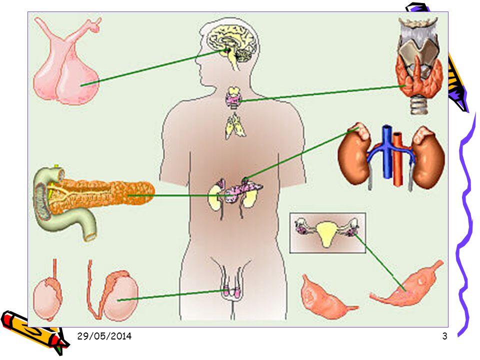 29/05/201444 Sécrétions et rôles (1) Hormones de la corticosurrénale Minéralo-corticoïdes (aldostérone): –Augmentation du taux de sodium et deau dans le sang.