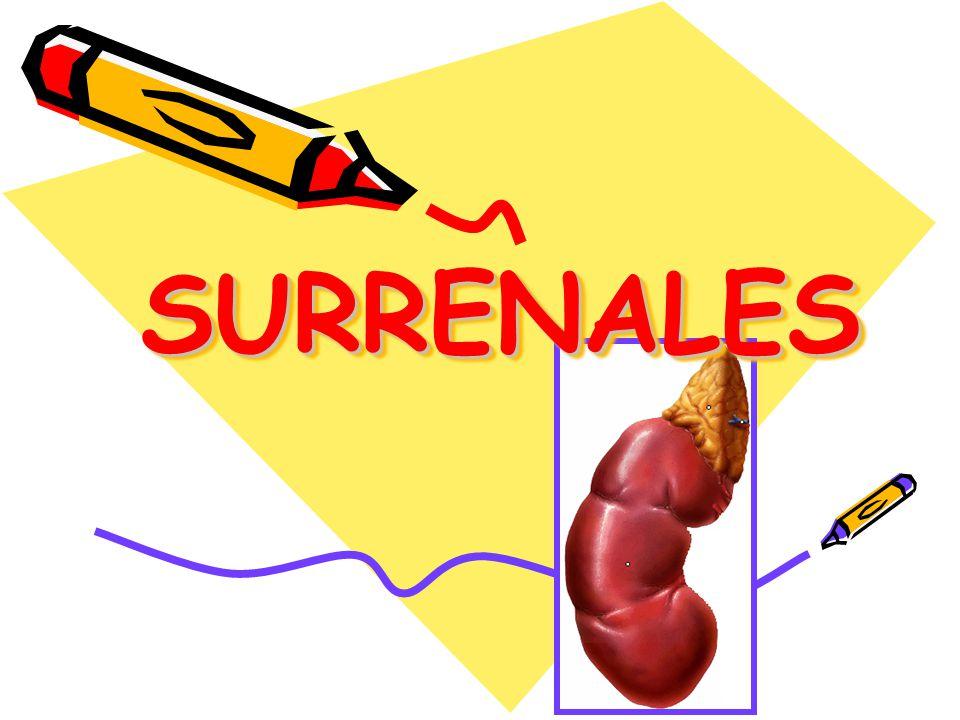 SURRENALESSURRENALES