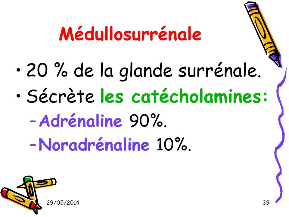 29/05/201439 Médullosurrénale 20 % de la glande surrénale. Sécrète les catécholamines: –Adrénaline 90%. –Noradrénaline 10%.