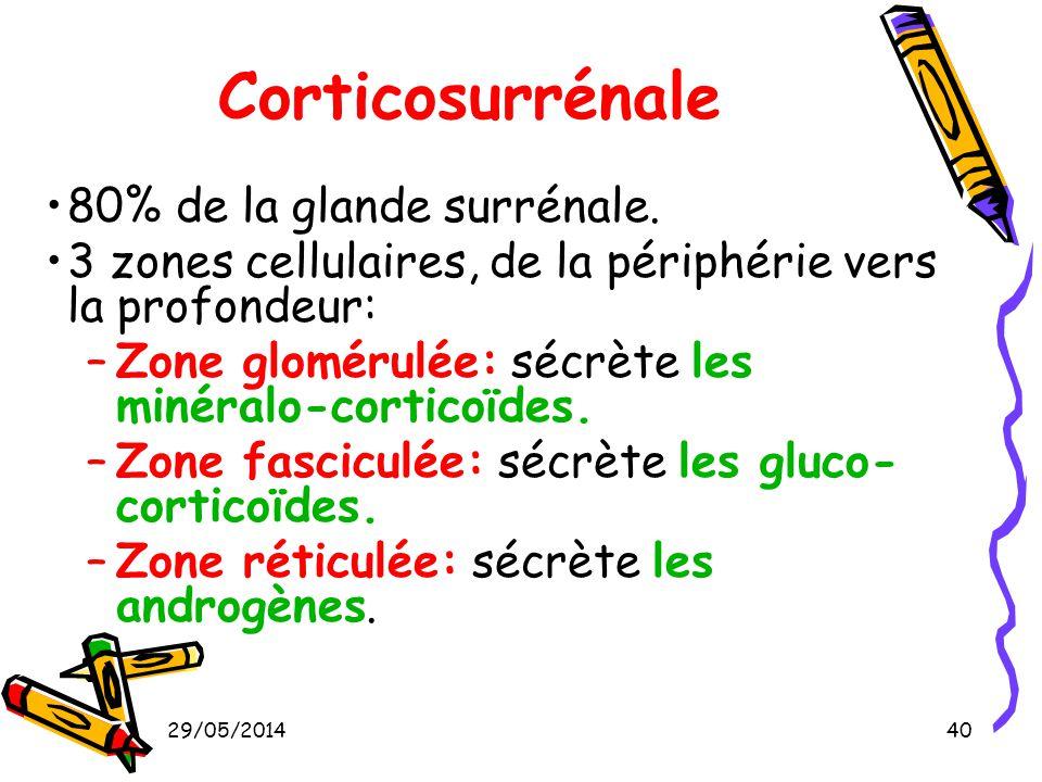 29/05/201440 Corticosurrénale 80% de la glande surrénale. 3 zones cellulaires, de la périphérie vers la profondeur: –Zone glomérulée: sécrète les miné