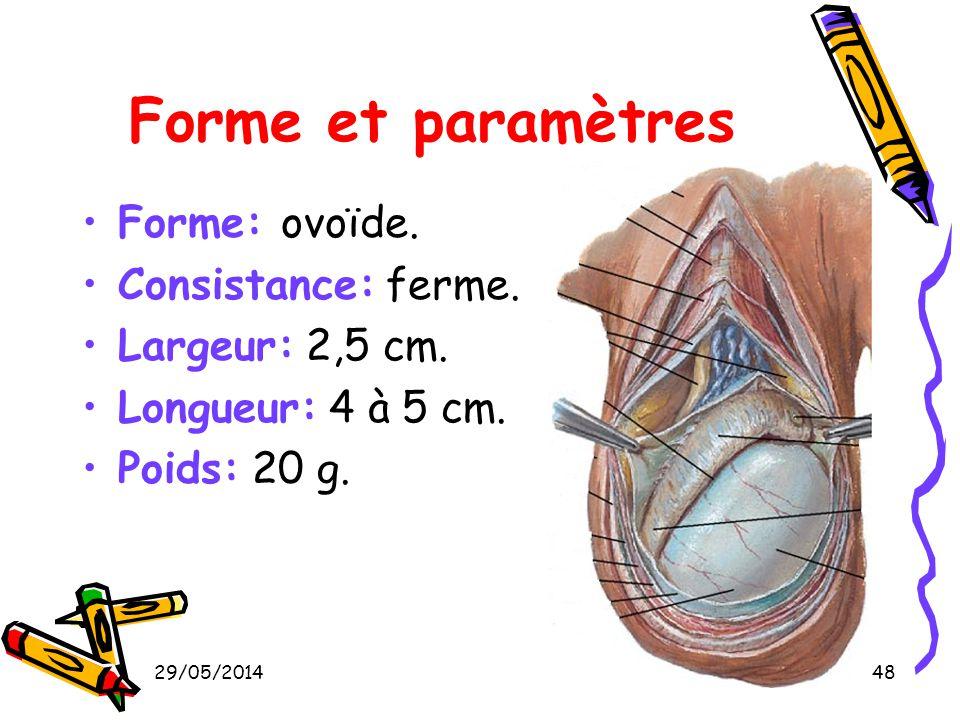29/05/201448 Forme et paramètres Forme: ovoïde. Consistance: ferme. Largeur: 2,5 cm. Longueur: 4 à 5 cm. Poids: 20 g.