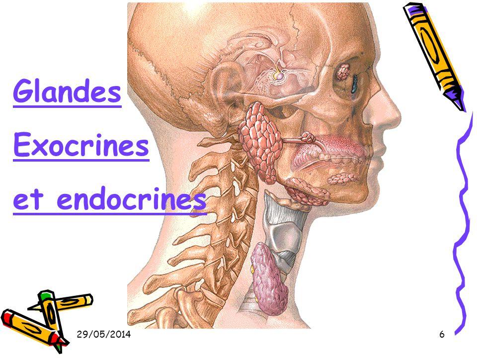29/05/20146 Glandes Exocrines et endocrines