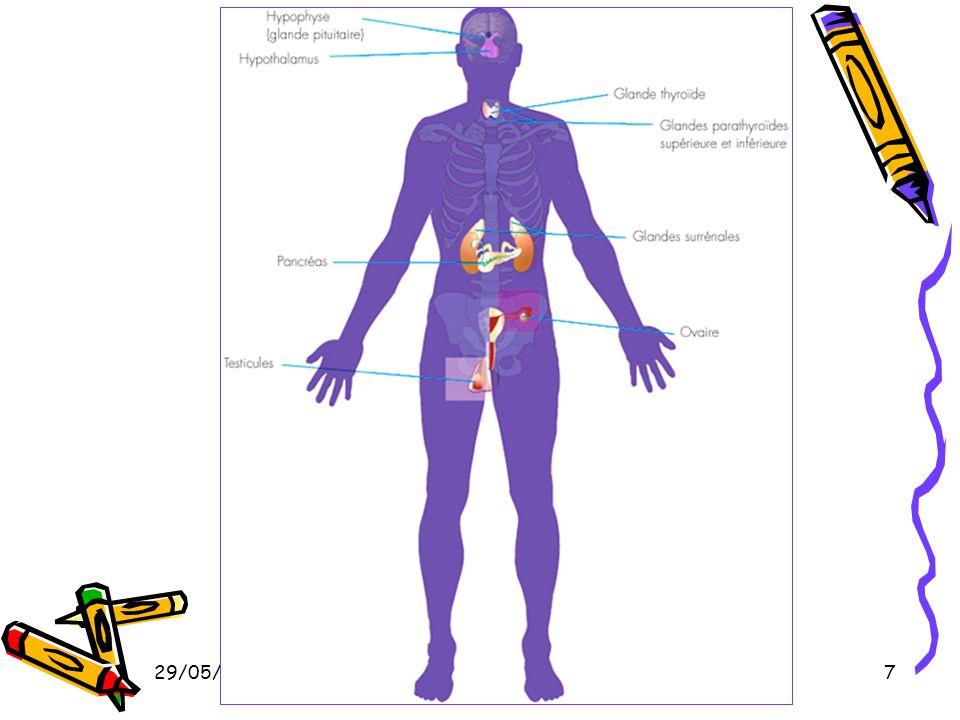 29/05/2014Dr. BAYOUD - Système endocrinien 7