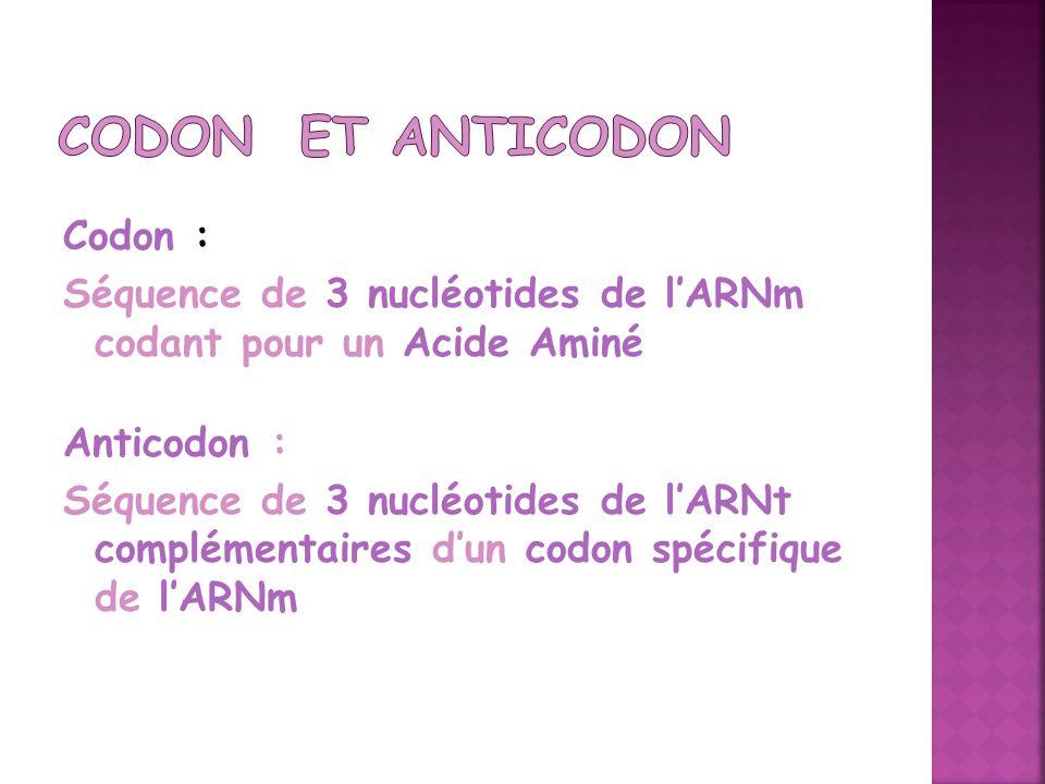 Codon : Séquence de 3 nucléotides de lARNm codant pour un Acide Aminé Anticodon : Séquence de 3 nucléotides de lARNt complémentaires dun codon spécifi
