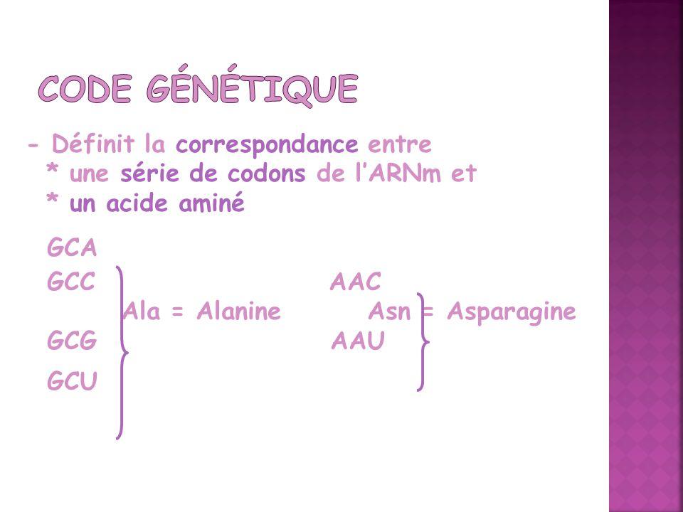 - Définit la correspondance entre * une série de codons de lARNm et * un acide aminé GCA GCC AAC Ala = Alanine Asn = Asparagine GCG AAU GCU