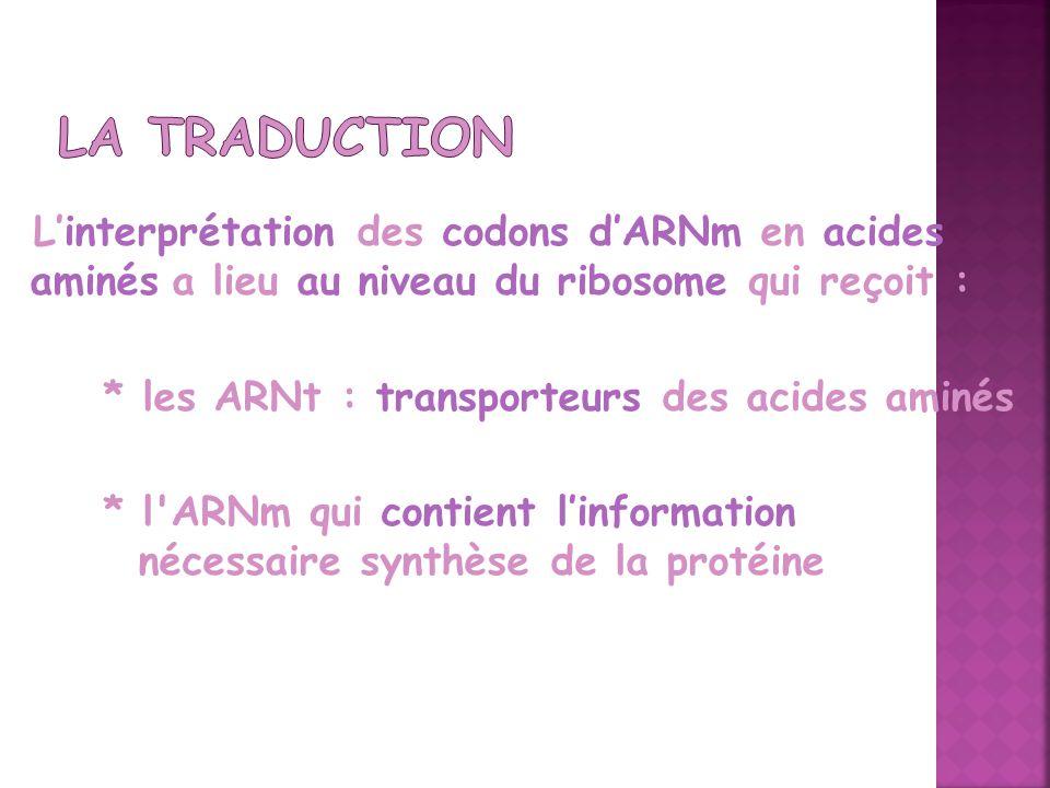 Linterprétation des codons dARNm en acides aminés a lieu au niveau du ribosome qui reçoit : * les ARNt : transporteurs des acides aminés * l'ARNm qui