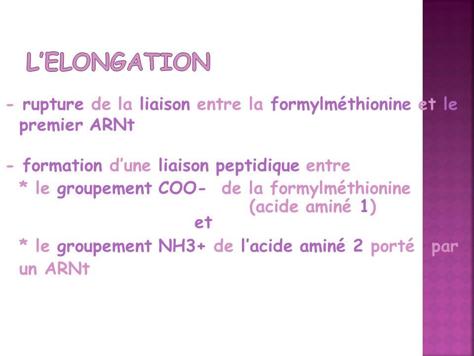 - rupture de la liaison entre la formylméthionine et le premier ARNt - formation dune liaison peptidique entre * le groupement COO- de la formylméthio