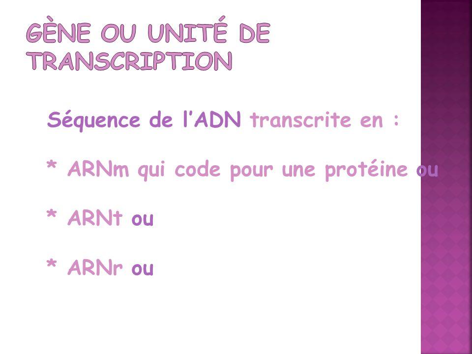 Séquence de lADN transcrite en : * ARNm qui code pour une protéine ou * ARNt ou * ARNr ou
