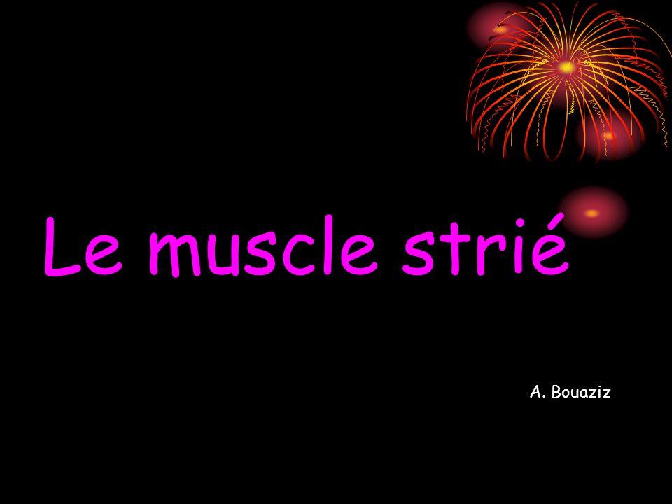 Le muscle strié A. Bouaziz