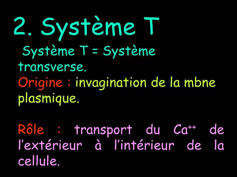 2. Système T Système T = Système transverse. Origine : invagination de la mbne plasmique. Rôle : transport du Ca ++ de lextérieur à lintérieur de la c