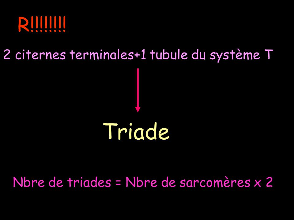 R!!!!!!!! 2 citernes terminales+1 tubule du système T Triade Nbre de triades = Nbre de sarcomères x 2