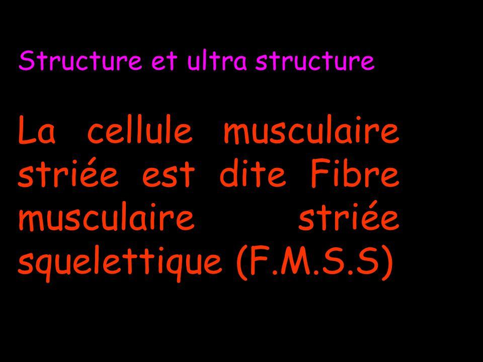 F.M.S.S. 1 Sarcolemme 1 Sarcoplasme périphérique 1 myoplasme central