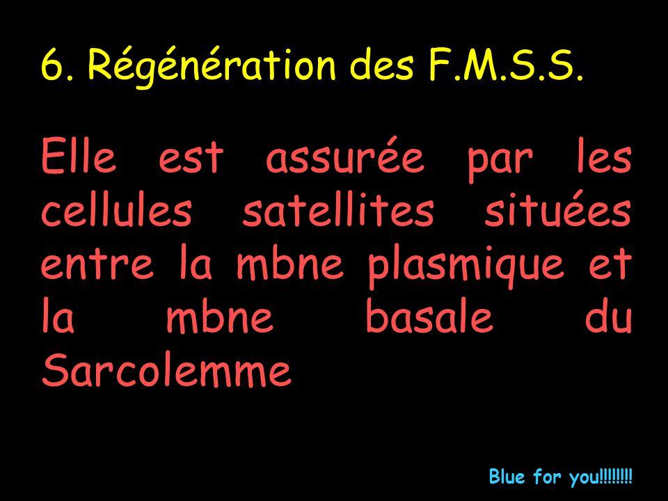 6. Régénération des F.M.S.S. Elle est assurée par les cellules satellites situées entre la mbne plasmique et la mbne basale du Sarcolemme Blue for you