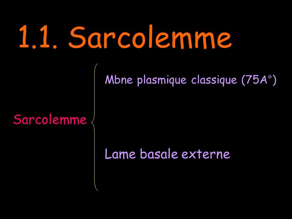 Myofibrille Lame basale Mbne plasmique Réticulum sarcoplasmique Sarcosome Tubule du système T Citernes terminales Triade Z Z A I/2 Ultra structure du R.