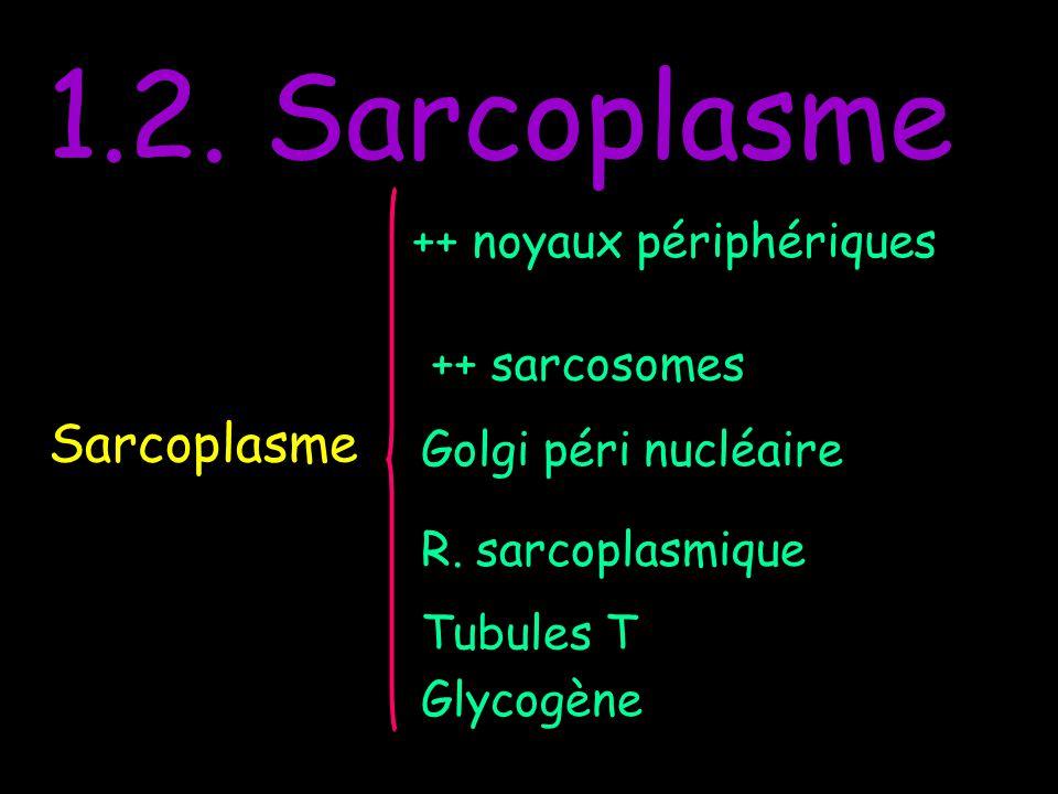 1.2. Sarcoplasme Sarcoplasme ++ noyaux périphériques ++ sarcosomes Golgi péri nucléaire R. sarcoplasmique Tubules T Glycogène