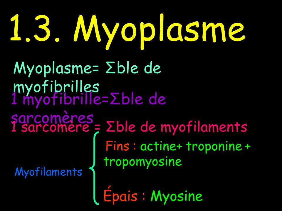 1.3. Myoplasme Myoplasme= Σble de myofibrilles 1 myofibrille=Σble de sarcomères 1 sarcomère = Σble de myofilaments Myofilaments Fins : actine+ troponi