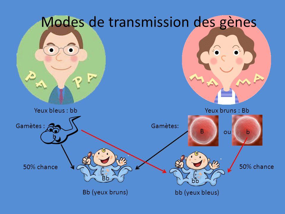 Modes de transmission des gènes Yeux bruns : Bb Gamètes BB (yeux bruns) Bb (yeux bruns) bb (yeux bleus) Bb (yeux bruns) brun = 3 chances sur 4 ou 75% bleu = 1 chance sur 4 ou 25% b B ou B b Bb bb Bb BB