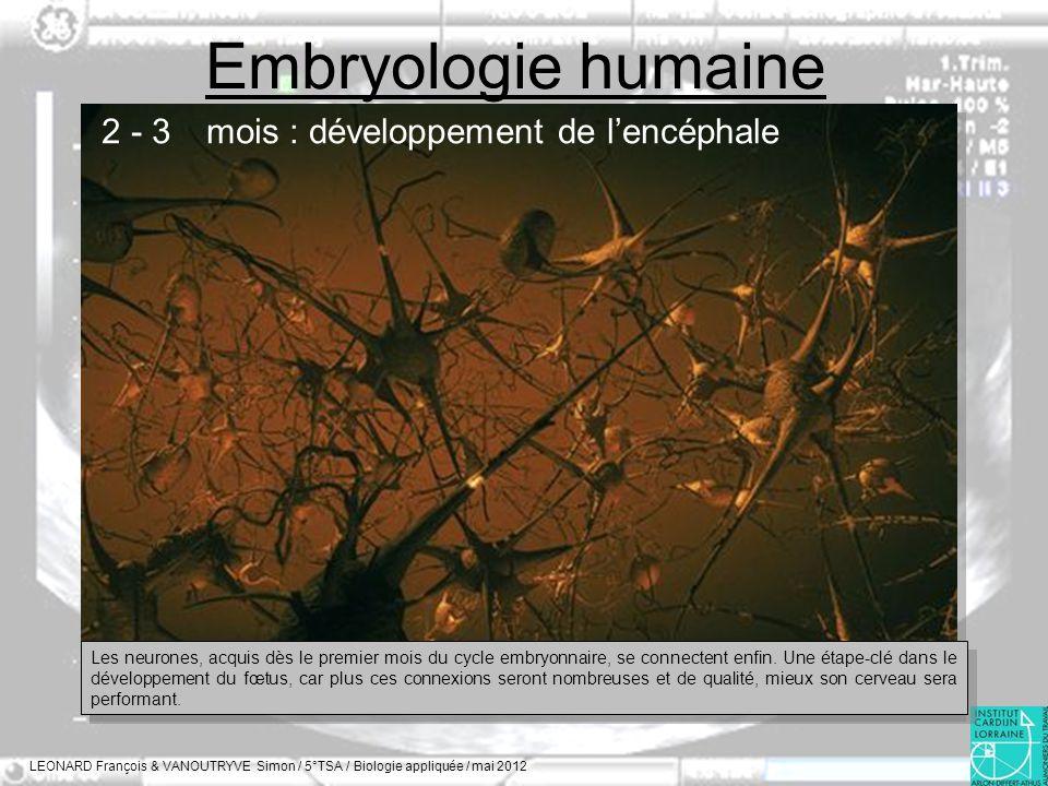 Embryologie humaine LEONARD François & VANOUTRYVE Simon / 5°TSA / Biologie appliquée / mai 2012 2 - 3 mois : développement de lencéphale Les neurones,