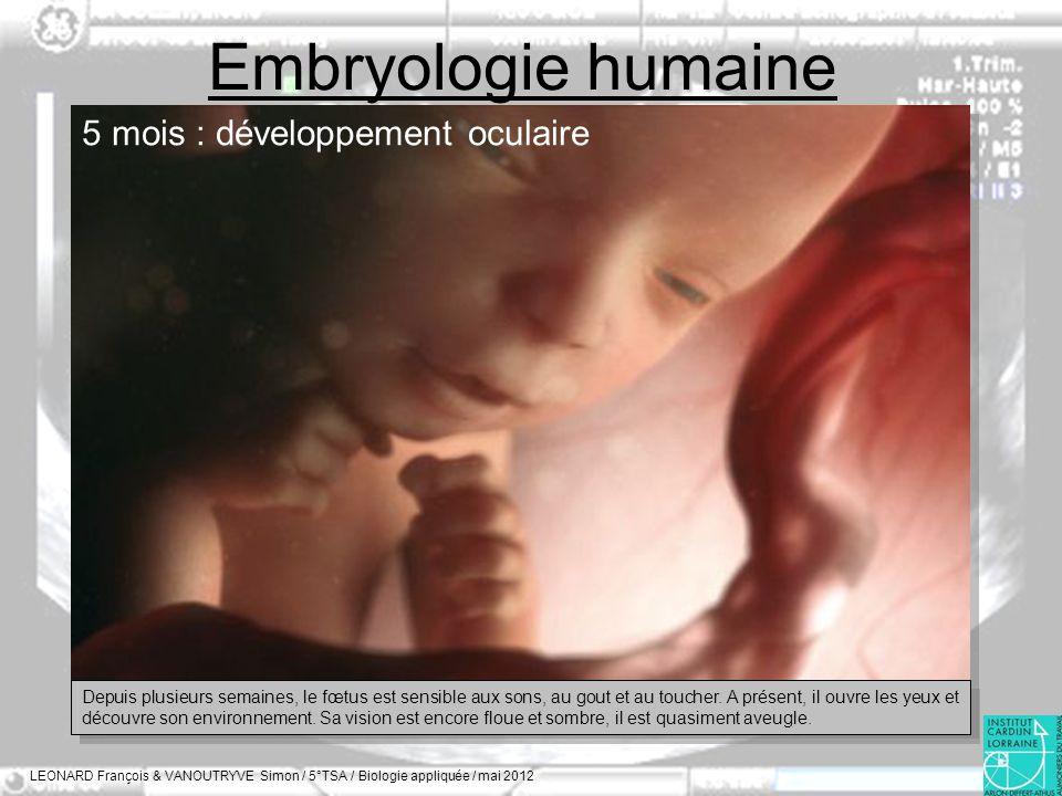 Embryologie humaine LEONARD François & VANOUTRYVE Simon / 5°TSA / Biologie appliquée / mai 2012 5 mois : développement oculaire Depuis plusieurs semai
