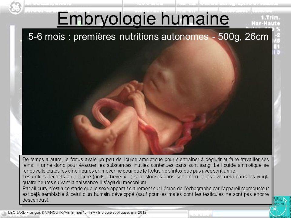 Embryologie humaine LEONARD François & VANOUTRYVE Simon / 5°TSA / Biologie appliquée / mai 2012 5-6 mois : premières nutritions autonomes - 500g, 26cm