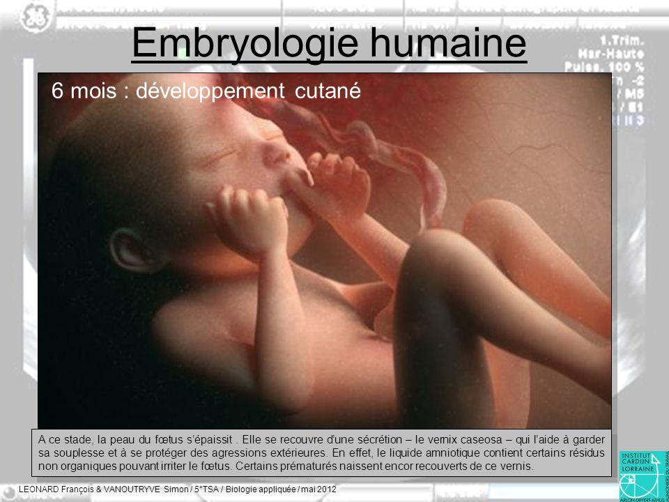 Embryologie humaine LEONARD François & VANOUTRYVE Simon / 5°TSA / Biologie appliquée / mai 2012 6 mois : développement cutané A ce stade, la peau du f